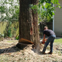Tree Removal Baton Rouge