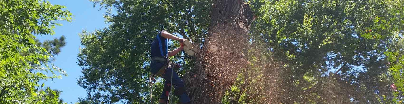 Tree Care Company Baton Rouge