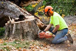 Tree Services Baton Rouge