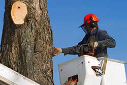 tree-trimmer