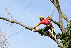 Tree Trimming Service Baton Rouge