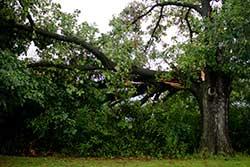 Baton Rouge Tree Service