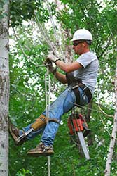 Licensed Arborist Baton Rouge