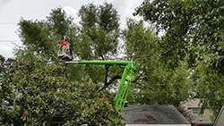 Precision Tree Care Baton Rouge