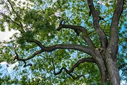 Tree Care Baton Rouge
