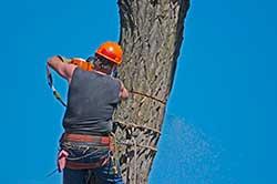 tree-company